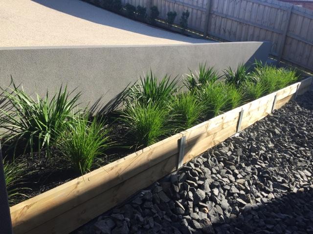 kangaroo paw regal velvet, lomandra lime tuff, garden, landscaping, retaining wall