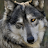ZaZa M. avatar image