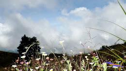 ngebolang gunung prau dieng 13-14-mei-2014 pen 038