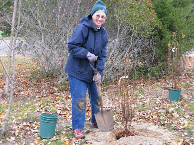 Hammo Planting - Shannon Schiesser - IMG_4896.JPG