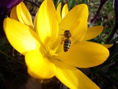 Felicitari insecte