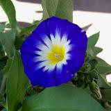Gardening 2012 - 115_1518.JPG