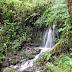 Podocarpus Nationalpark
