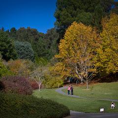 2011 04 25 Mt Lofty Botanic Garden - IMG_6384.jpg