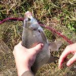 20140624_Fishing_BasivKut_024.jpg