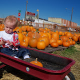 Pumpkin Patch - 115_8257.JPG