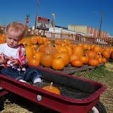 Pumpkin Patch - 115_8257.JPG
