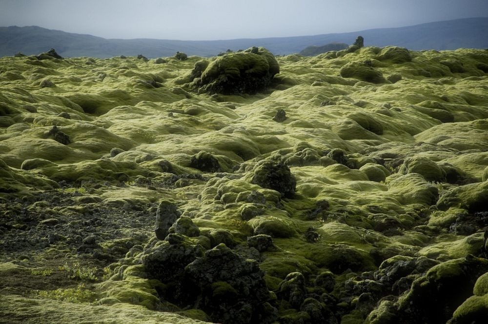 mossy-lava-fields-iceland-4
