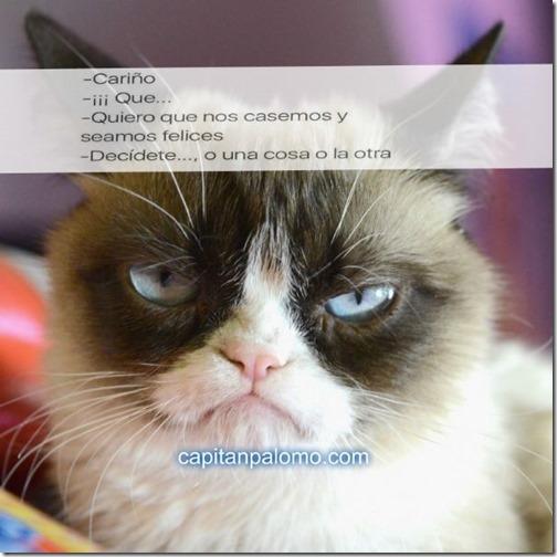 meme del gato gruñon (6)