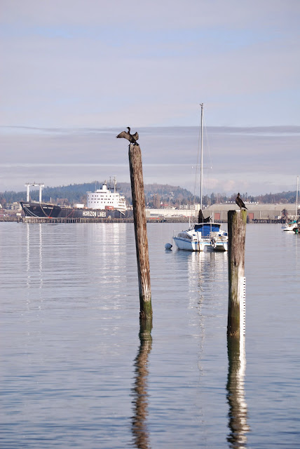 View of Bellingham Bay from Boulevard Park / Credit: Bellingham Whatcom County Tourism