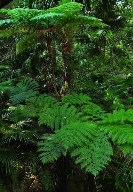 La végétation (fougères arborescentes) autour de la terrasse. Umina Beach (NSW, Australie), 21 octobre 2011. Photo : Barbara Kedzierski