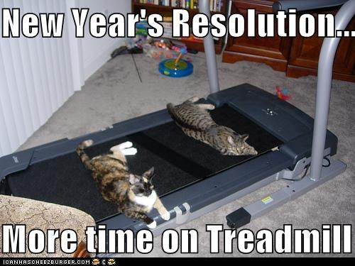 photo of some cats laying on a treadmill...need to spend more time on the treadmill