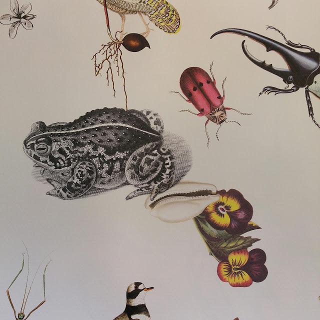 motif grenouille, papier peint