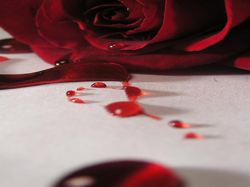 Bleeding Rose Wallpaper, Bloody