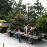 Gartenbonsai geliefert nach Gstaad