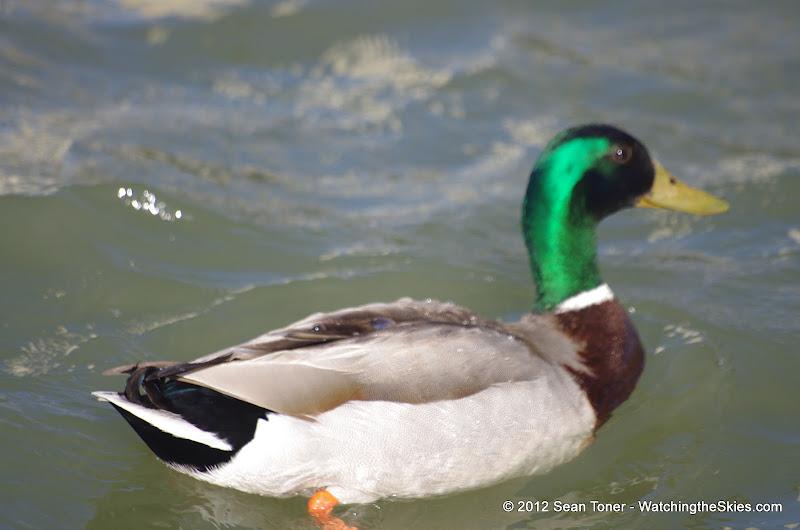04-27-12 Rockwall Harbor - IMGP0659.JPG