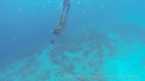 Si nuota con i pesci angelo - Bonaire