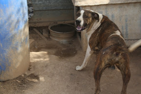 Other Ways We Help - Areeiro Rescue