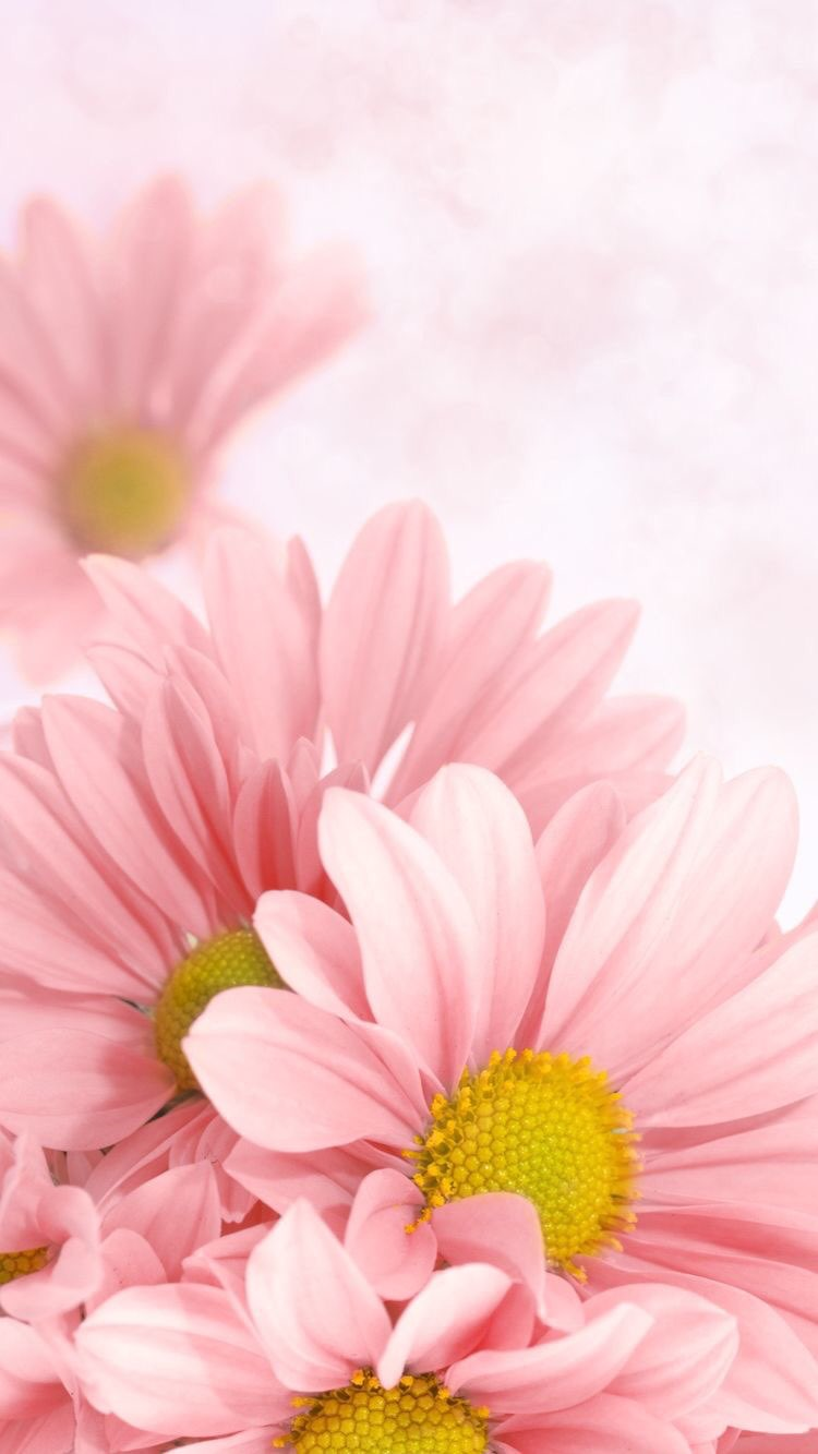 Iphone And Android Wallpapers Pink Delilah Flower Wallpaper