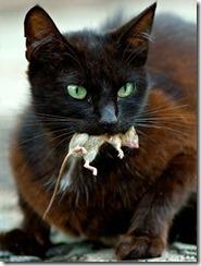 gato-rato-morto