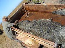 Mat with croc