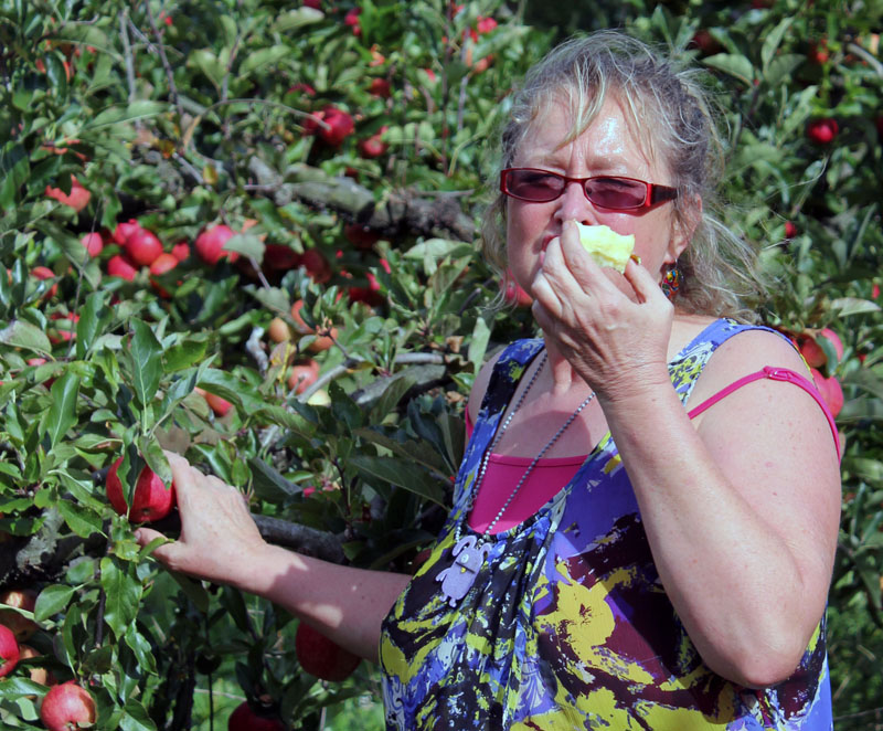rotorua artist janet keen s photography mosaics paintings  apple eating is hot work