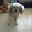 Carlos ulloa's profile photo