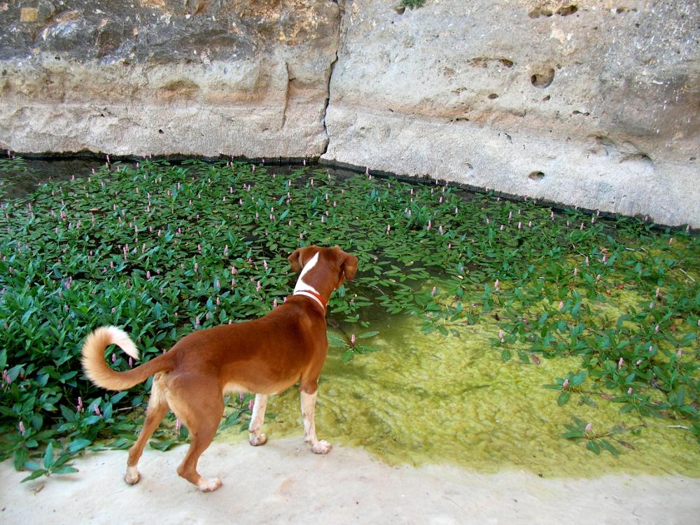 2007 · Torralba de los Frailes, flipando con las ranas