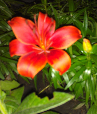 POD: Blooming Lilly