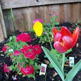 Gardening 2011 - 100_6767.JPG