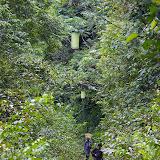 Près de Camp Patawa (second layon), Montagne de Kaw (Guyane). 16 novembre 2011. Photo : J.-M. Gayman