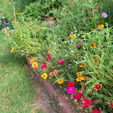 Gardening 2010, Part Three - 101_3697.JPG