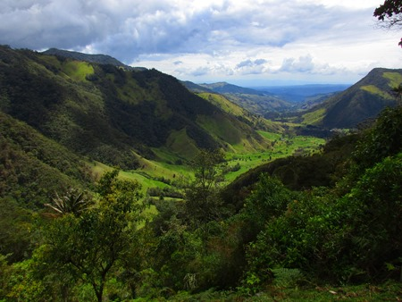 valle de Cocora desde el mirador