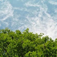 Področni mnogoboj, Sežana 2007 - P0207133.JPG