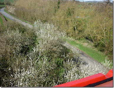 4 blackthorn from above