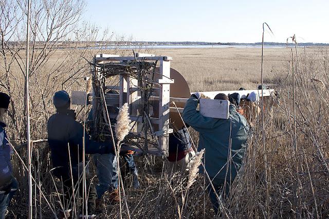 Osprey Platform 1/15/12 - IMG_5085.jpg