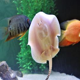 The Aquarium by Roxanne Dean - Animals Fish ( nature, fish, water, swimmers, aquarium )