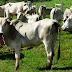 Polícia prende líder de associação criminosa que praticava furto de gado na região de Remígio (PB)