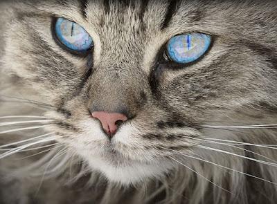 बिल्ली के बारे में 70 रोचक तथ्य | 70 Interesting Facts About In Cat - anokhagyan.in