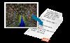 Como cifrar imágenes a base 64 en Ubuntu para insertarlas en css