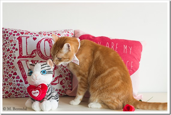 Teddy_Valentine_01