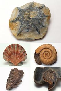 Клипарт из фотографий окаменелых доисторических животных и растений