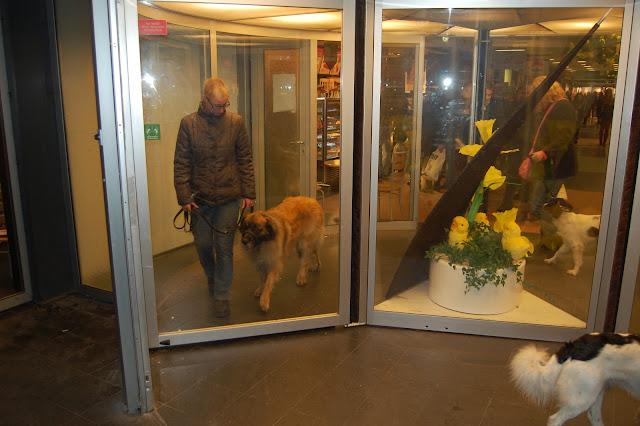 Jonge Hond centrum Emmen - 2012-04-01%2B040.JPG