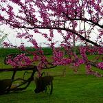 LindaMcFarlane-Springtime in Oklahoma.jpg