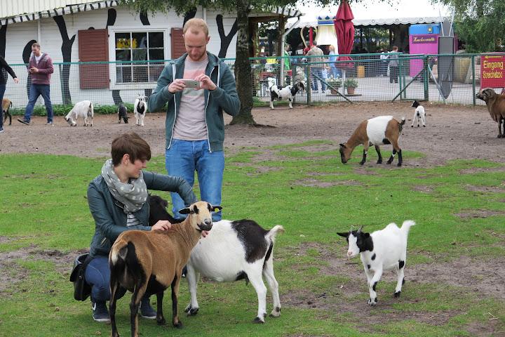 Ziegen und Schafe sind im Streichelzoo zu finden