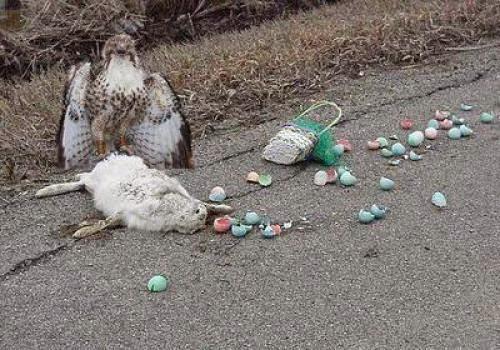 Horus Versus The Easter Bunny
