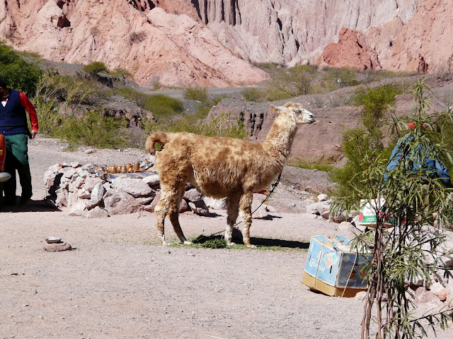 Everybody likes Llamas