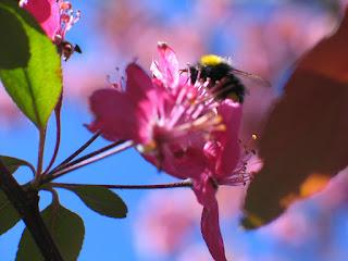 Fleurs et Insects