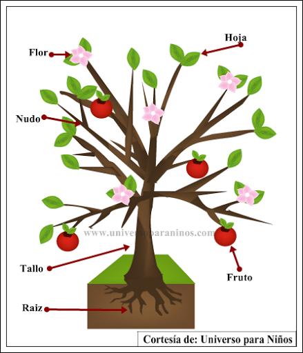 Partes de una planta para ni os de primaria for Un arbol con todas sus partes
