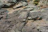 A single left hand petroglyph, perhaps its matching right hand has been stolen.